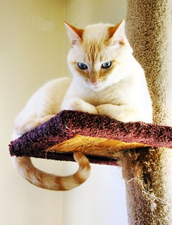 King of the cat tree! | by dacotahsgirl