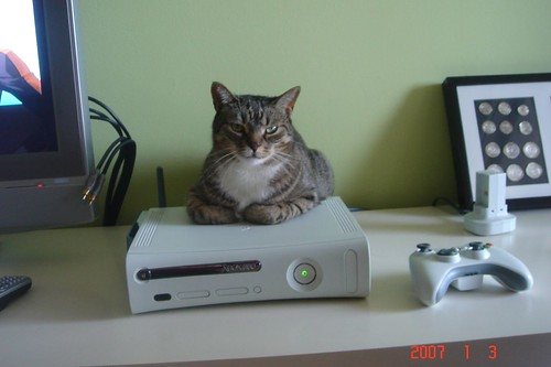 Cat keeping warm on the XBox360 | by Adventuress Heart