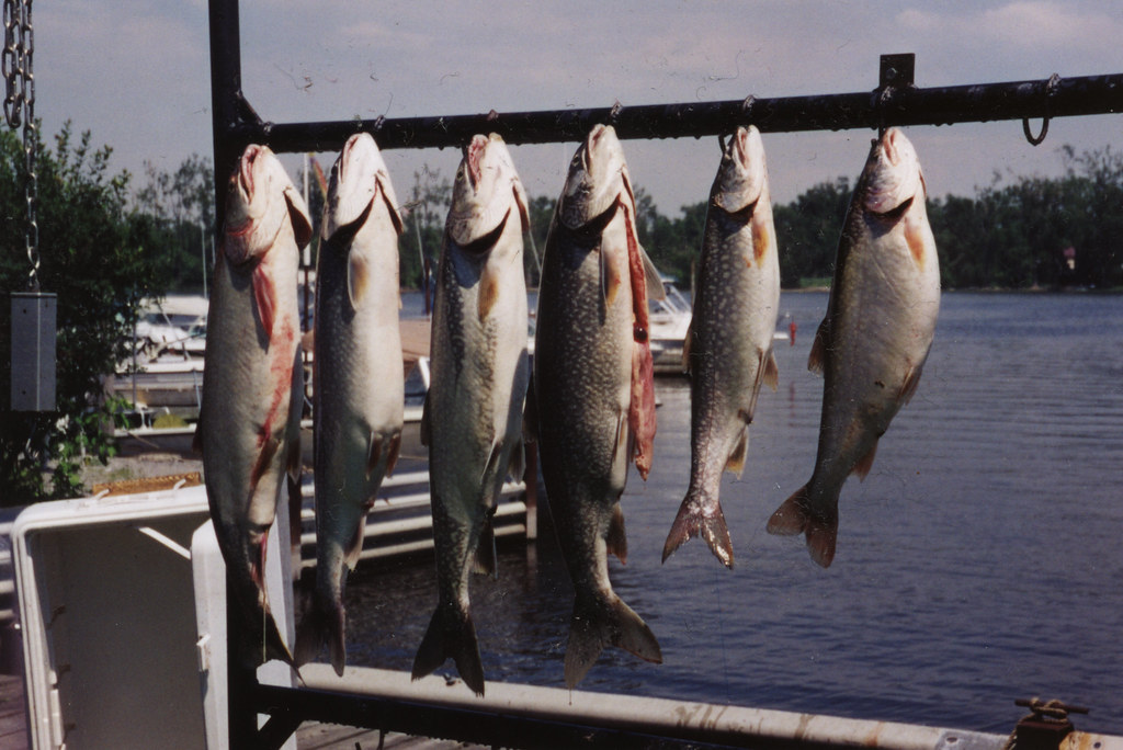 Watertown ny 1998 stocked fish from the lake for Watertown fishing report