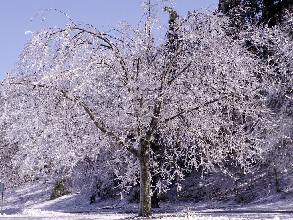 Beautiful Winter Storm Tree Eatontown Nj Jackie Flickr