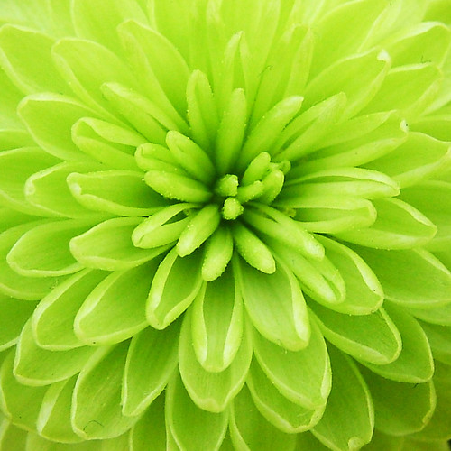 lime green | by Aleeka dreams