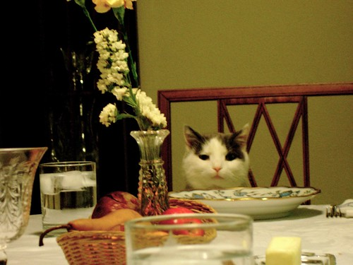 thanksgiving cat | by intersubjectiv