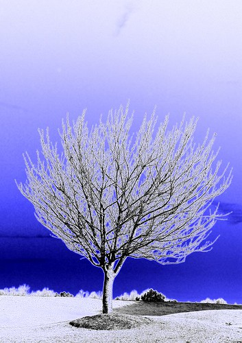 tree in the blue | by Amelia PS