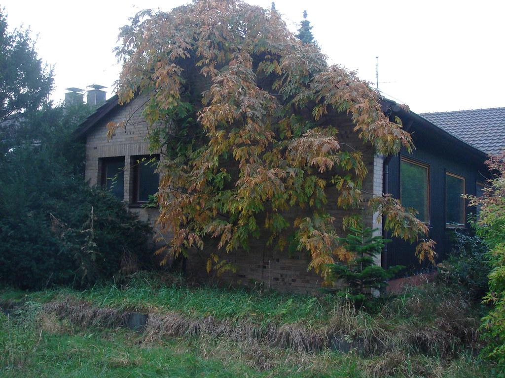 holzhaus schwedisches holzhaus in schlangen deutschland hans blecke flickr. Black Bedroom Furniture Sets. Home Design Ideas
