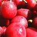 field of fruit