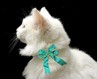 This is Andrea, an elegant white cat whose owner died. ~ EXPLORED | by Pixel Packing Mama ~ 26 Million Views