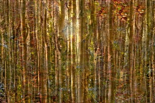 Wood between the Worlds | by Harold Davis