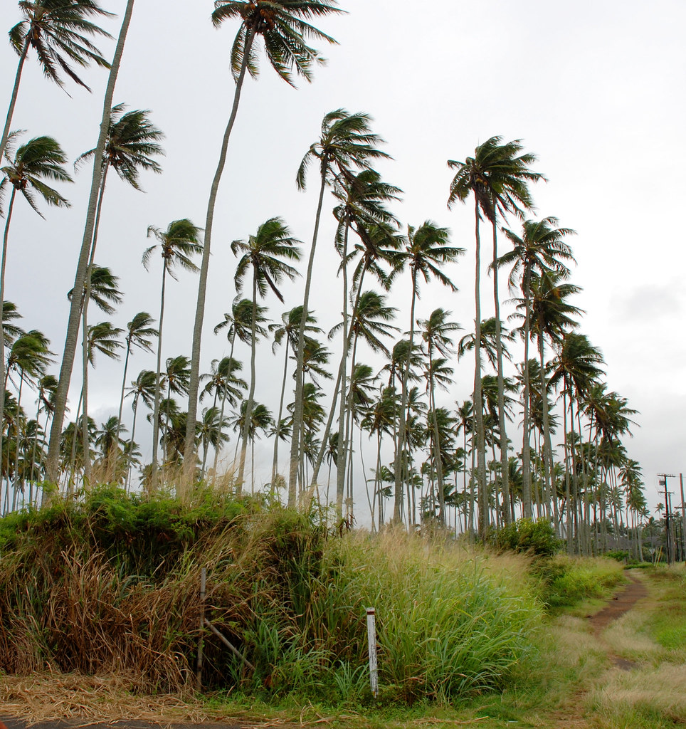 Coconutgrove1 The Coconut Grove Of Coconut Grove