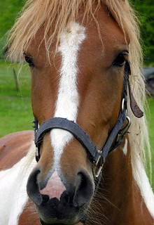 Portrait of a horse | by :Linda: