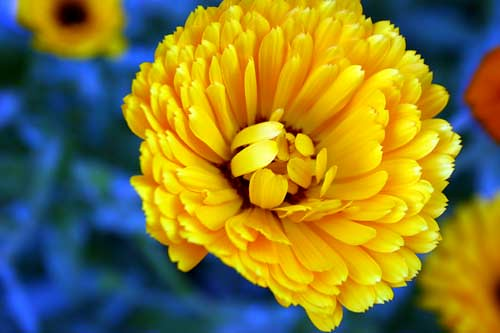 yellow & blue | by Andrea Scher