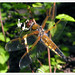 dragonfly 173 2855a