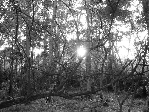 sunlight through trees black - photo #14