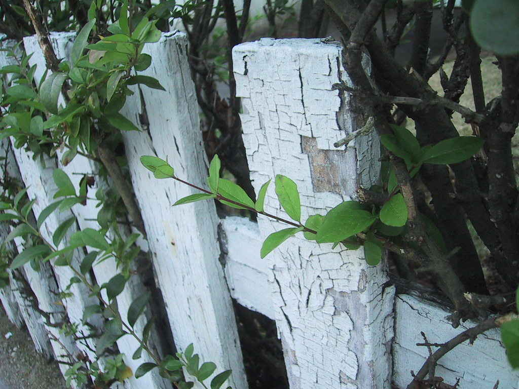 White Fence Paint