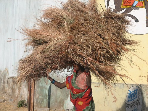 Indian Woman Near Udaipur - Heavy Lifting | by glazaro