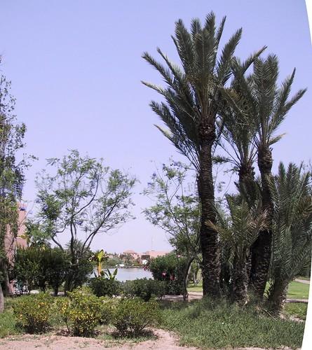 Hotel Maroc Marrakech Pas Cher