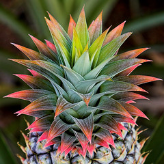 Pineapple #2 | by konaboy