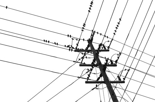 black birds and white wires