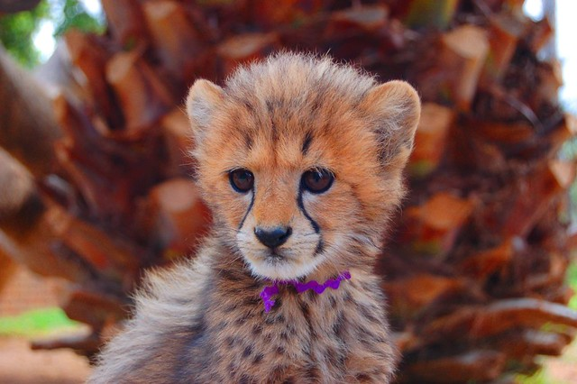 Cute Baby Cheetah | Taken On The Garden Route, South ...