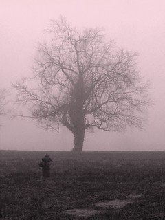 Alone in the Fog | by photo_secessionist