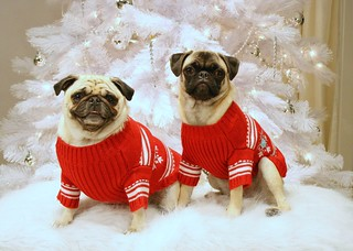 Our Christmas Pugs, xmas card 2006 | by chunks