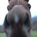 Morning walk  Horse gets close 22-11-06 131