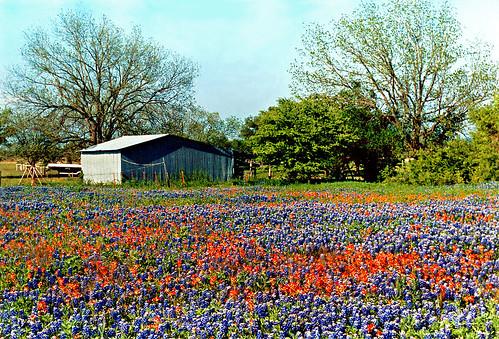Image Result For House Garden Wallpaper