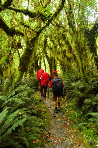 Milford_Track-2007-02-15 115022DSC_0065 | by mike_harre