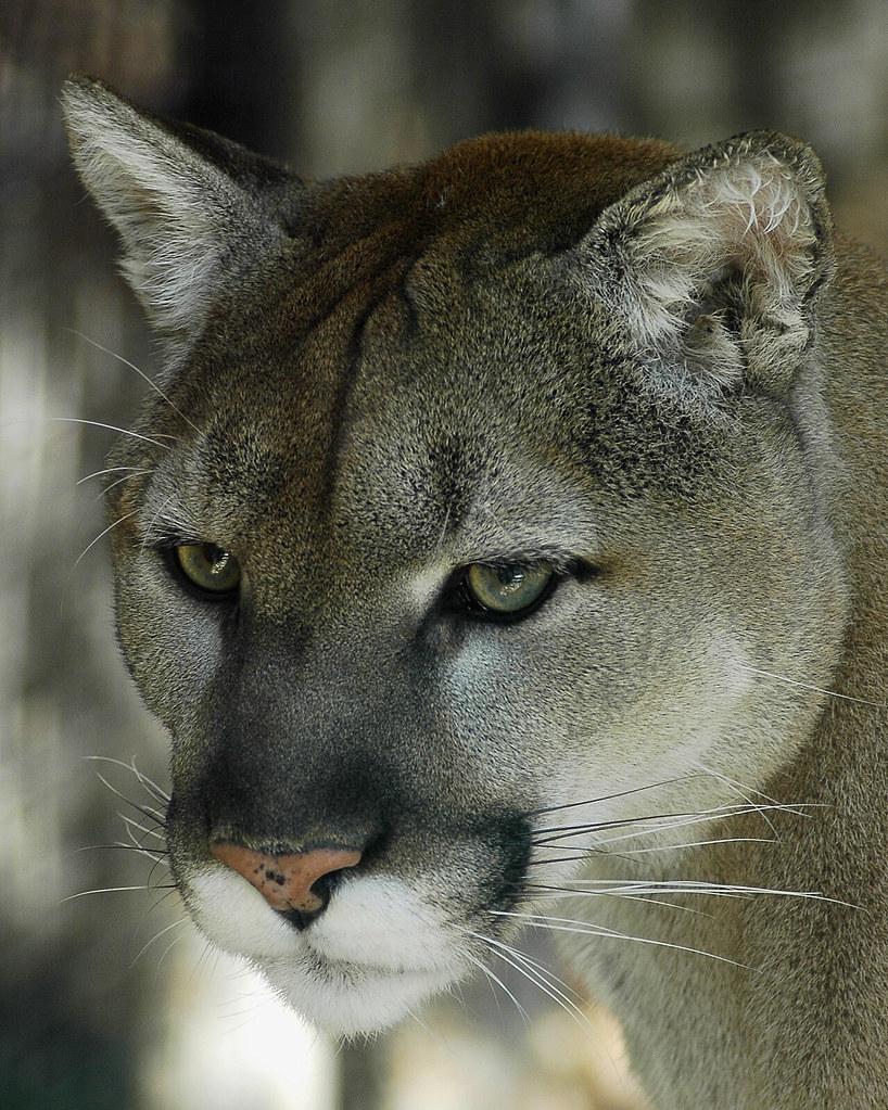 Wisconsin Big Cat Resue