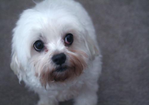 Debi S Dogs Pet Sitting Santa Clara