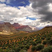 Grand Canyon, On The Tonto