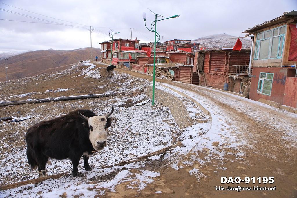 「四川省甘孜藏族自治州」的圖片搜尋結果