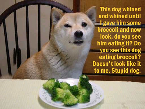 Dog Broccoli This Dog Whined And Whined Until I Gave