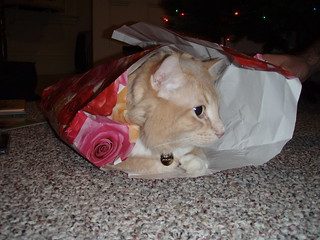 Wrapping paper kitty | by CDaisyM