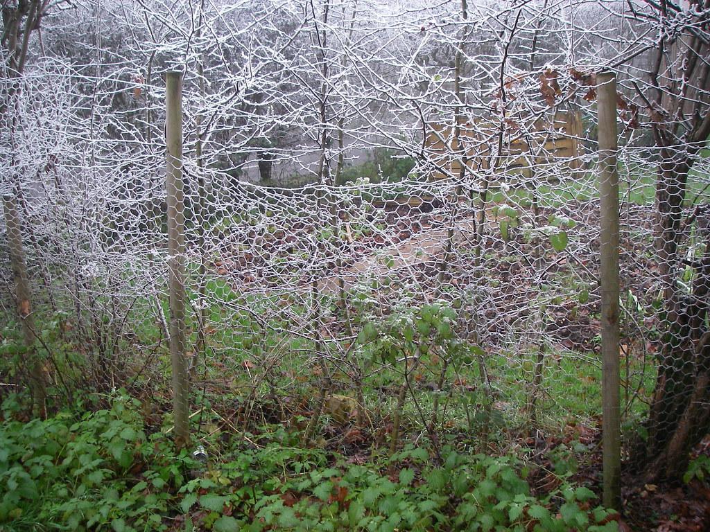 winter garden fence denni schnapp flickr