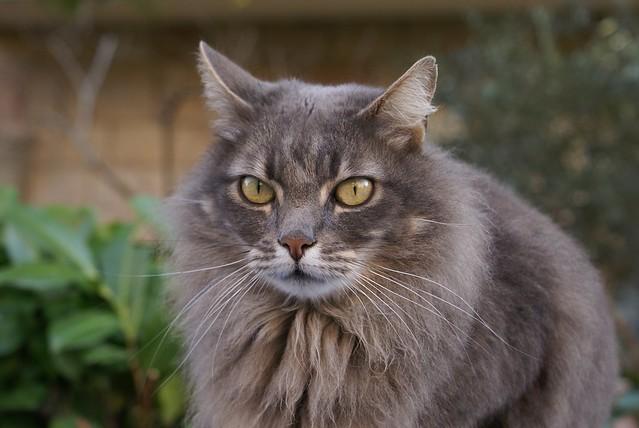 Priority Cat Food Review