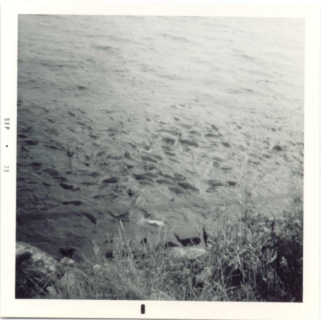 Where the ducks walk on the fish pymatuning lake for Pymatuning fishing report
