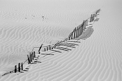 Dune Fence | by Boyds Gallery