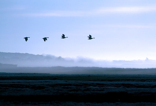 Canada Geese -  6:52AM | by Chris Seufert