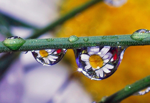 sparklin' drops of spring | by Steve took it