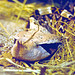 SsssSSSsssssnake: Gaboon viper - SsssSSSssssschlange: Gabunviper (Bitis gabonica rhinoceros)