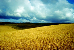 Stormy Skies & Golden Fields | by Evergreen2005