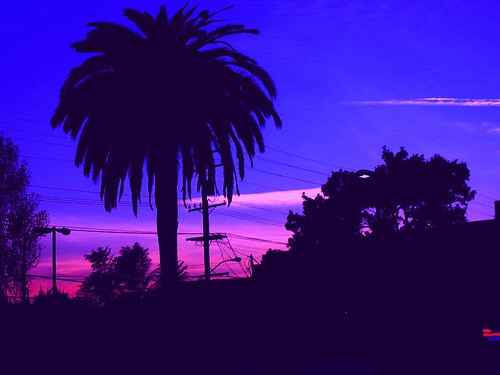 Palm Tree Amp Sunset West Hollywood Palm Tree Against A