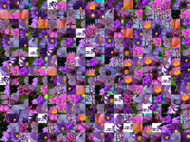 purple flower montage purple flower montage made with mont flickr