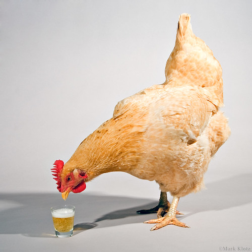 Chicken Takes a Break | by Mark Klotz