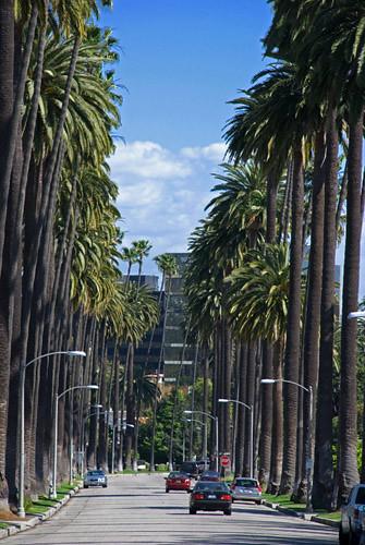 Beverly Hills Neighborhood Street View David Liu Flickr