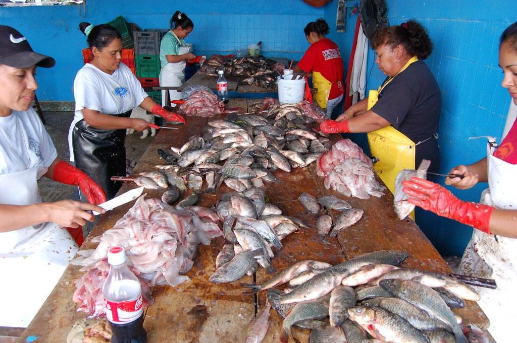 Tilapia Fish Processing Petatan Mexico These Little