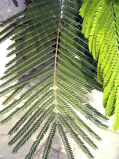 Palm Greens At Villa Delray Association