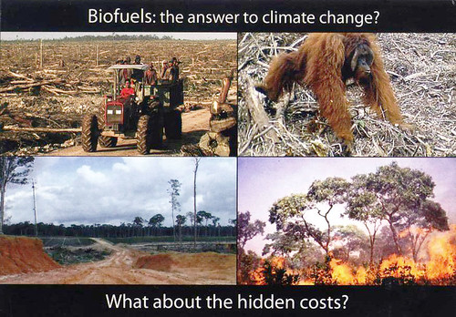 Biofuels postcard for MEPs (Europe) | by Films4Conservation