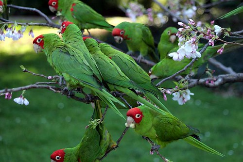 Many parrots, no pirates | by gwen