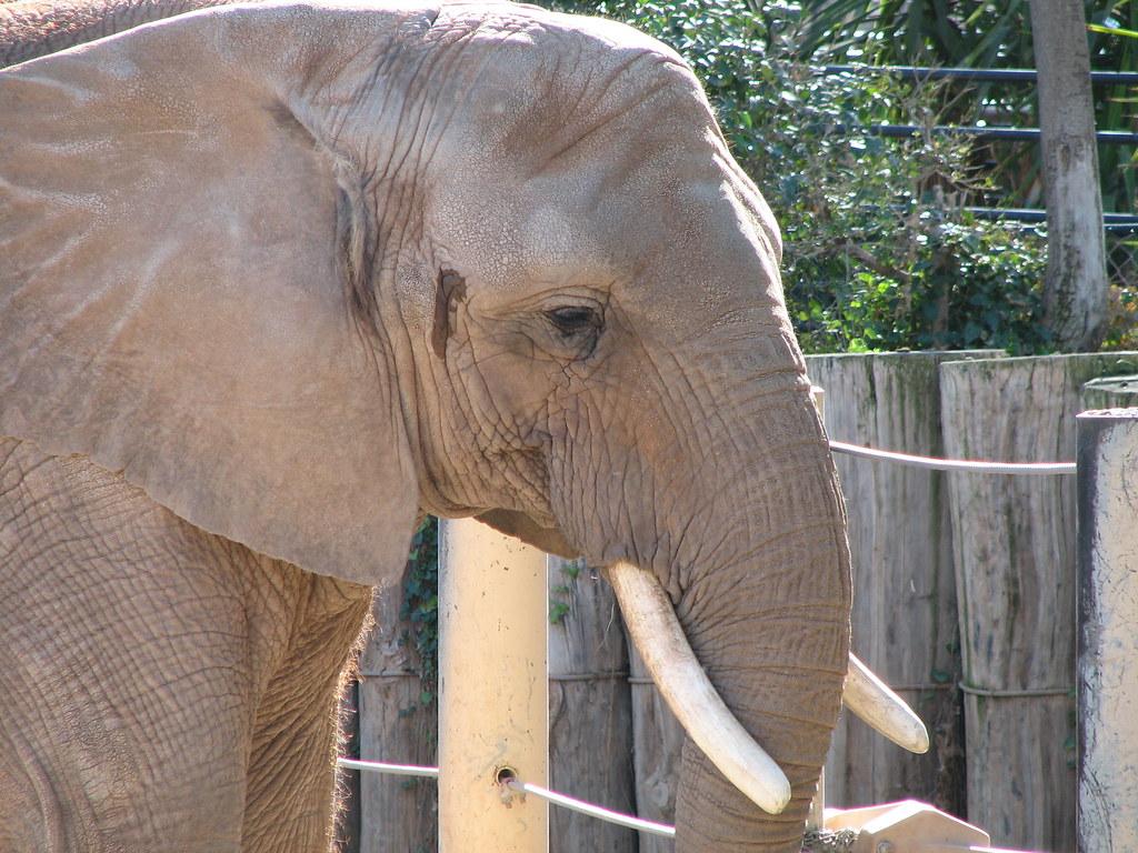 How Elephants Eat Their Food